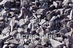 "3/4"" Purple Stone Acres Edge, Pelham  NH Landscape & Hardscape Supply, Landscaping & Hardscaping Supplies"